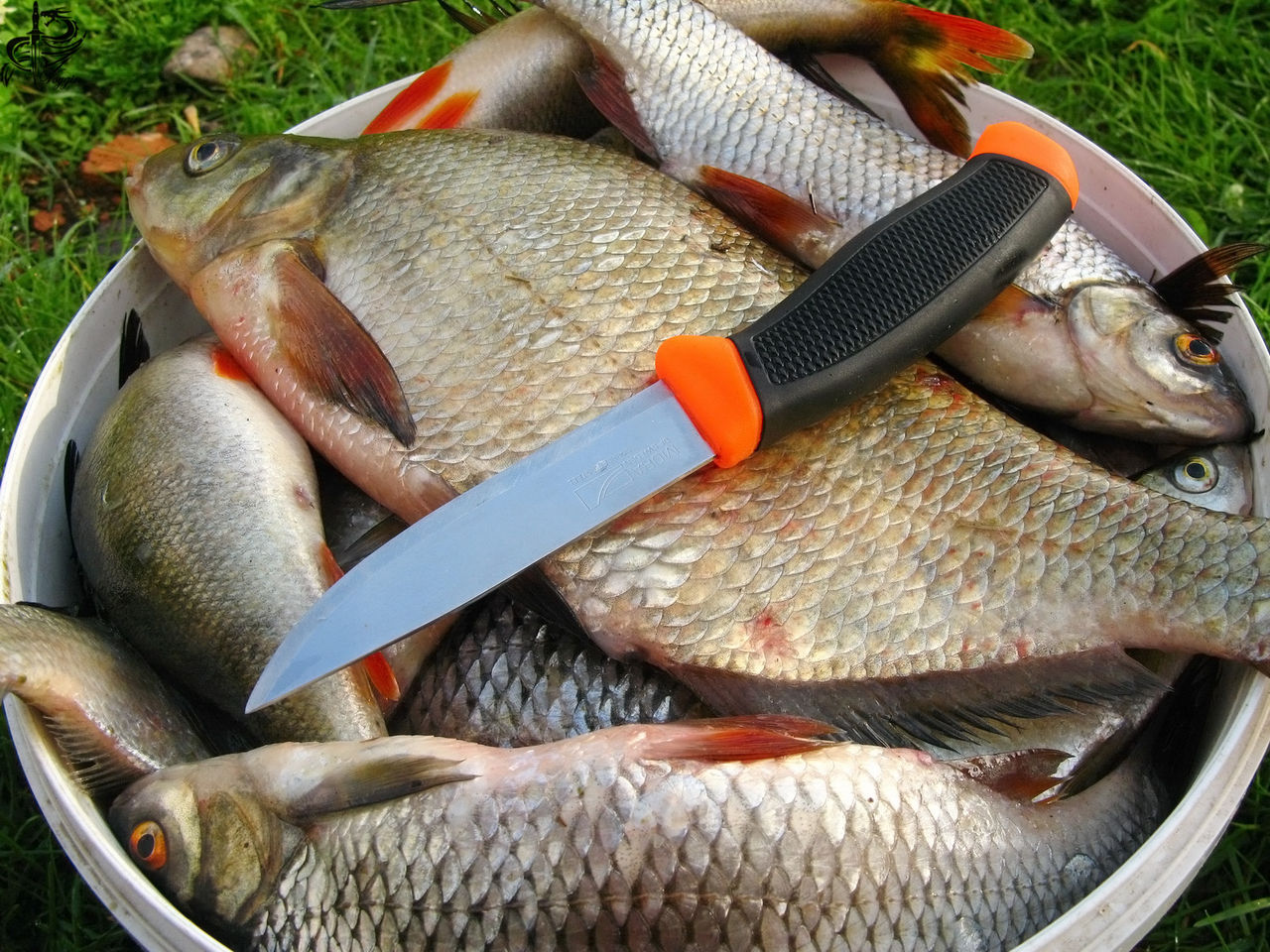 Наша рыбалка фото разновид рыб