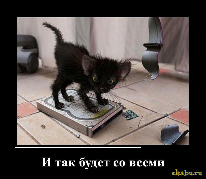 решил, злые коты демотиватор тут