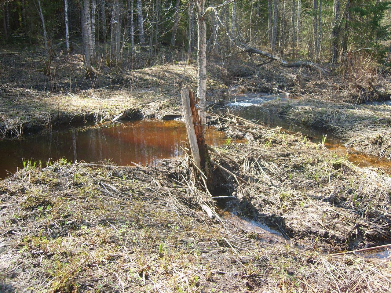 Дамба и плотина для пруда Разведение карпов 64