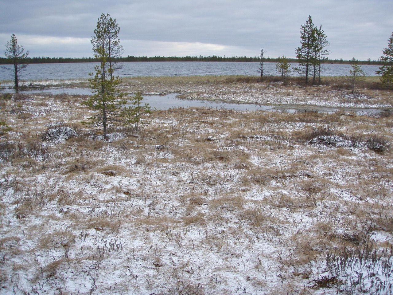 вам плохо, великое болото фото вологодская область очень