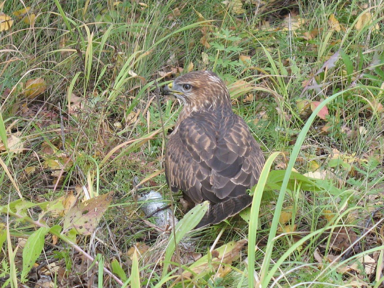 птицелов животное фото найти эти