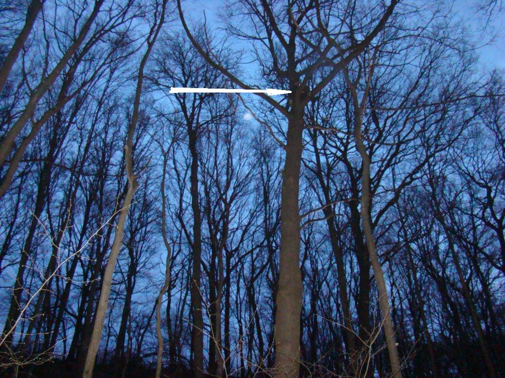 Переносная засидка на дерево своими руками 35