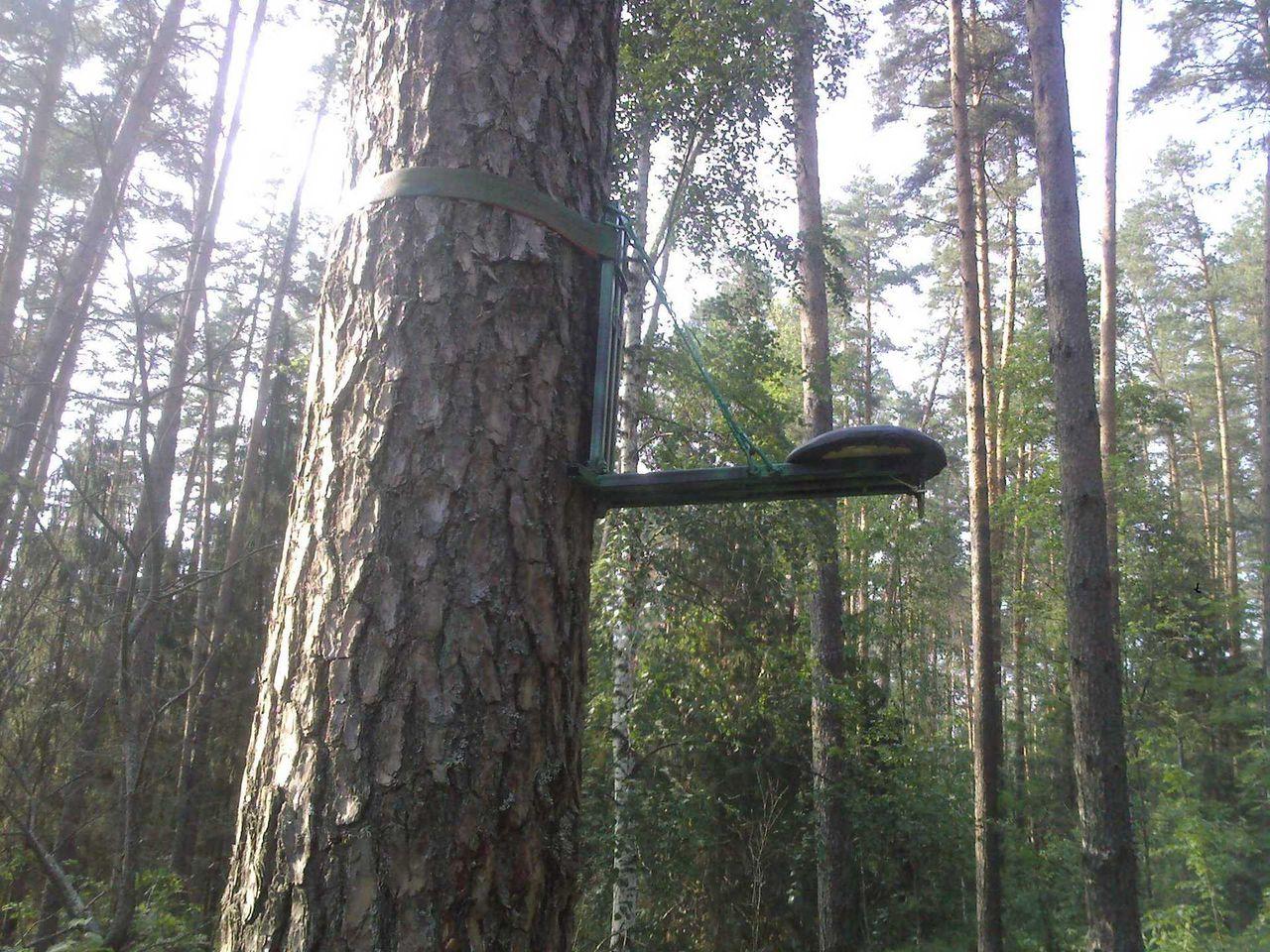 Как сделать засидку на дереве фото