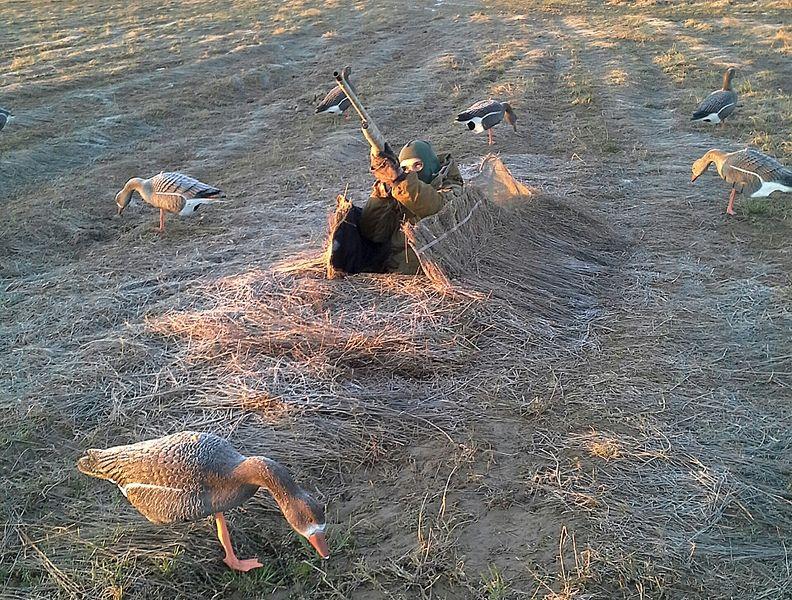 Скрадок на гуся фото