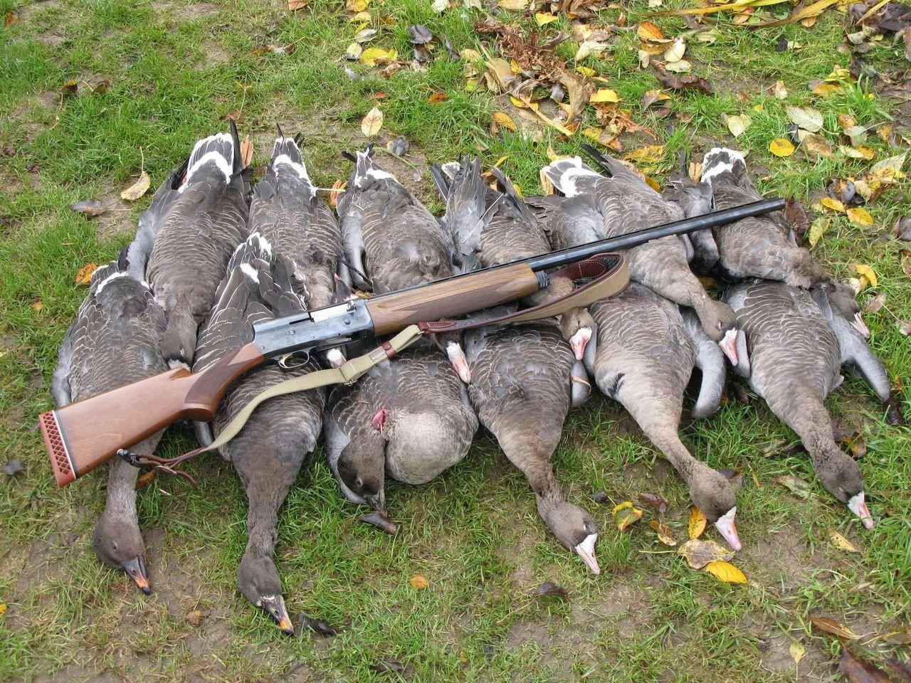 предложения по охоте на гуся на белом море весной