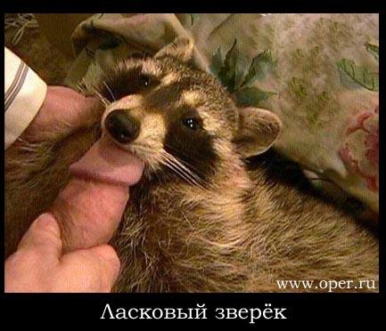 ebala-v-rot-takih-shenkov