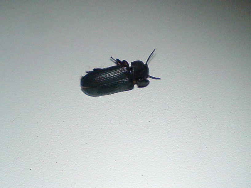 Черные жуки в доме ночью фото