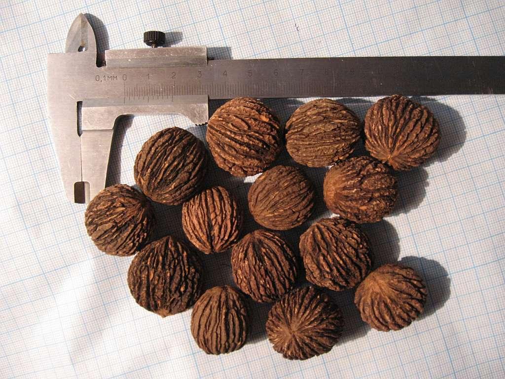 поделки из маньчжурского ореха фото