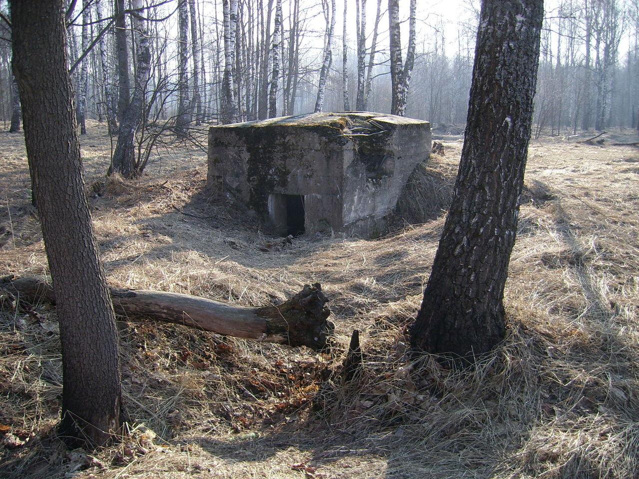 Леса тверской области фото окопов